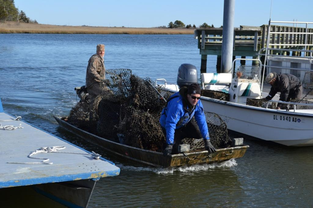 Inland bays center delaware center for the inland bays for Crab fishing boats for sale