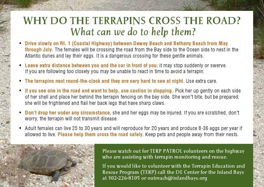 Inland Bays - tips on saving Diamondback Terrapins