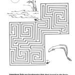 American Eel Maze
