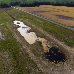 Collaborations Create Innovative Forest Wetland Project Near Frankford