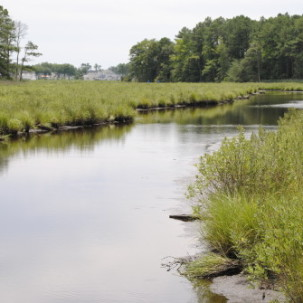 'Your Creek' Initiative to Launch at Upcoming Inland Bays  Meeting