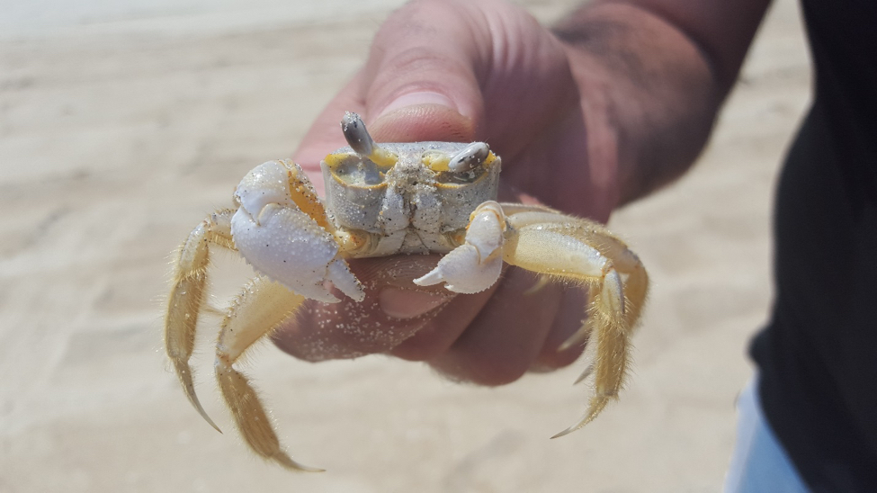 what part of a crab can't you eat