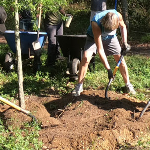 Volunteers Reforest James Farm Preserve in Ocean View