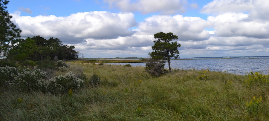 Sand beach transitions to low marsh, which transitions to high marsh at the James Farm Ecological Preserve.