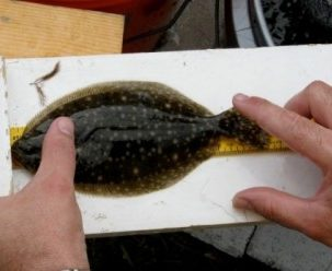 Delaware Center for the Inland Bays Seeks  Volunteers for Fish Survey