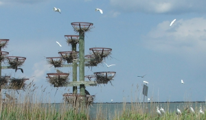 Middle Island Rookery Project