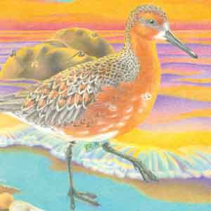 RedKnot_Book