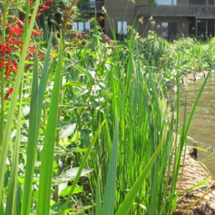 Center for Inland Bays Awarded Grant for  Living Shorelines on the Inland Bays