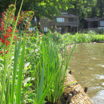 Living Shoreline stabilizes while allowing natural processes