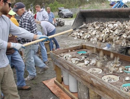 Volunteers use the Oyster Master to fill bags