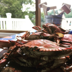 Predicting the Blue Crab Blues
