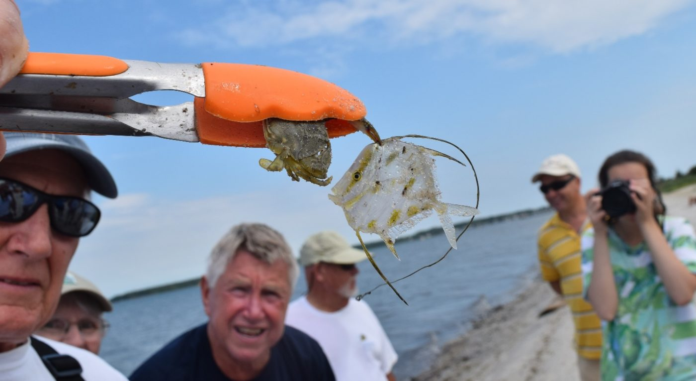Flounder and Bluefish and Stripers - Oh my!