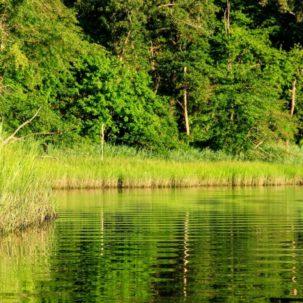 New Reforestation Plan Will Combat Effects of Urbanization/Pollution