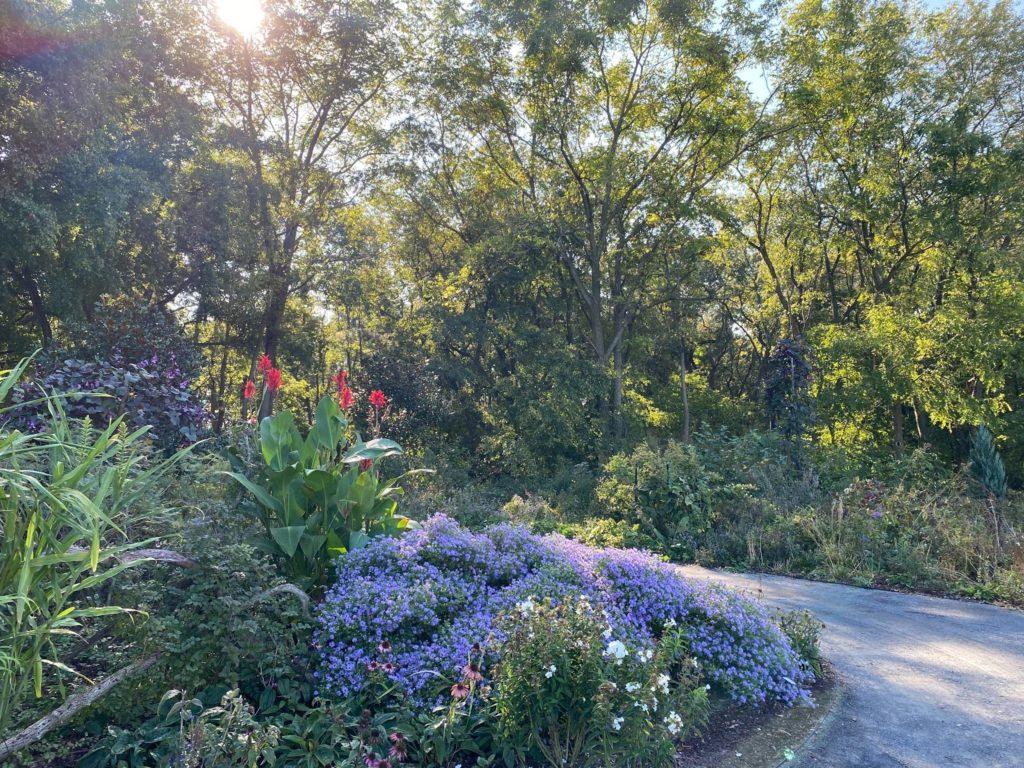 Meadow Garden at DBG